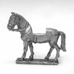 Light horse, standing