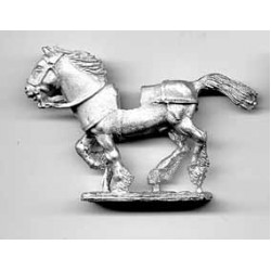 Heavy horse for Scottish medieval knights, uncovered, galloping